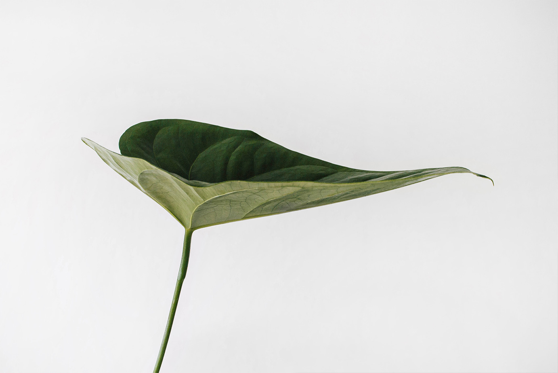 Sonia Garcia foto planta